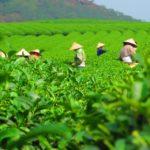 אושר בכפוף לרביזיה: מעסיק בענף החקלאות יחויב בהפקדות פנסיה ופיצויי פיטורים לעובד זר
